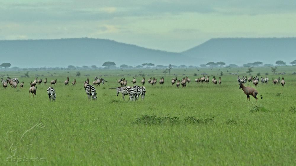Krajina v NP Serengeti v období dešťů