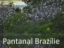Papoušci-Pantanal