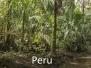 Papoušci-Peru